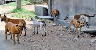 وجدة : محاربة الكلاب الضالة و البناء العشوائي تضع قائد الملحقة السادسة موضع تقدير و احترام الساكنة